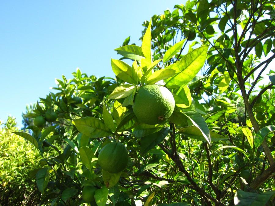lijfcoach sinaasappel fruit gezond